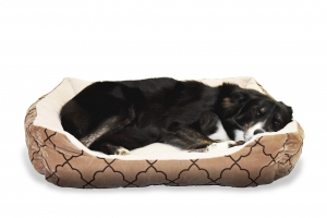 Image by Mira Gane from Pixabay of a Dog relaxing in a cozy bed