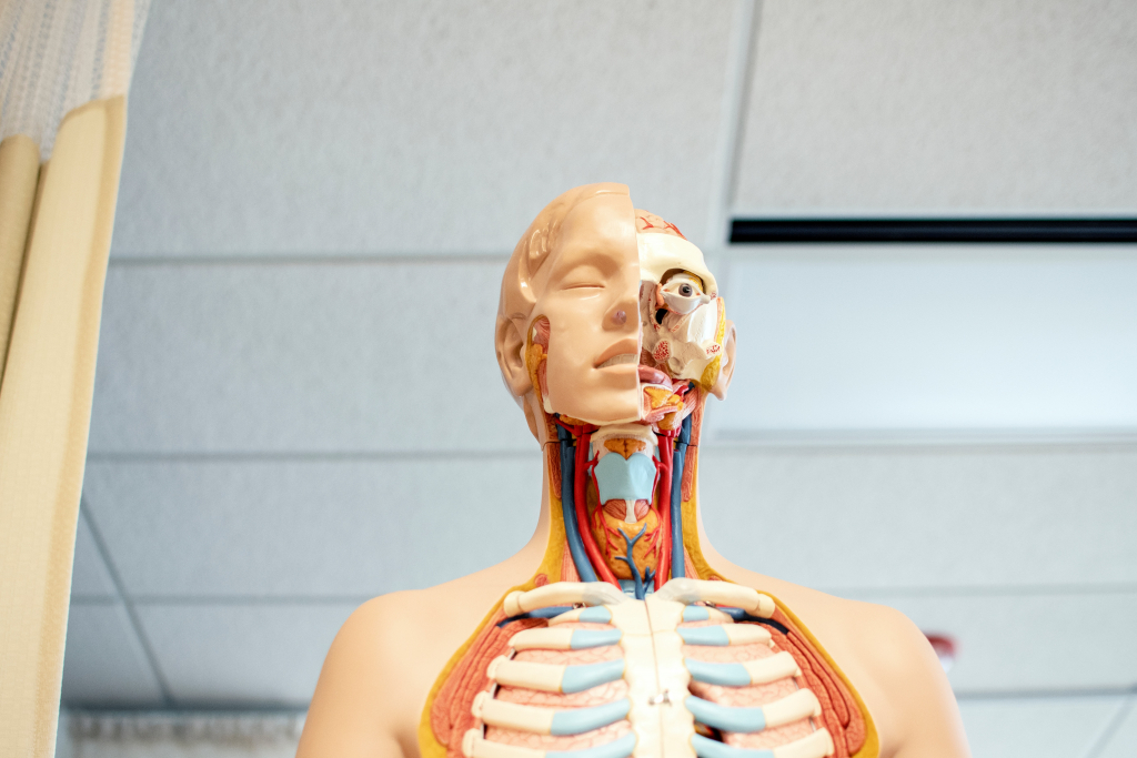Ten Medical Schools in Expensive US Cities Image. Photo of skeleton in medical school classroom.