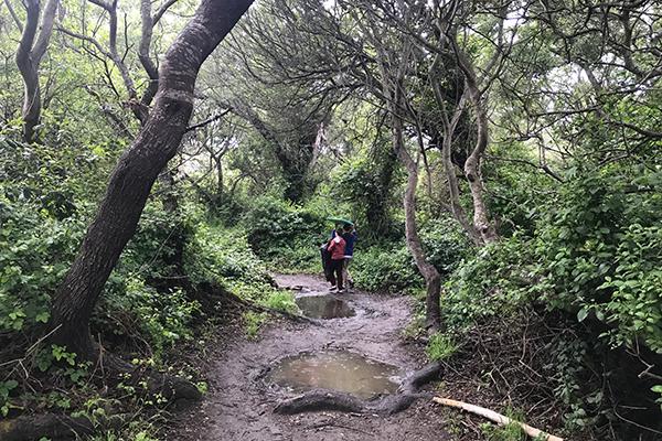 Walking on a path through the trees near the Big Sur California coastline.